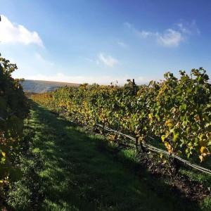 Proper Estate Vineyard