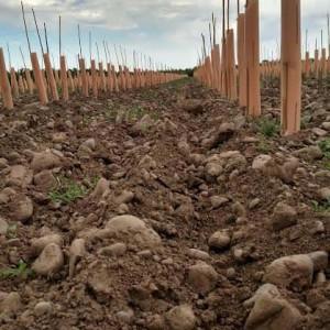 Stones Speak Vineyard